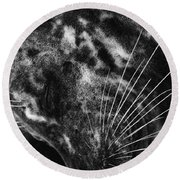 Seal Solitude Round Beach Towel