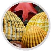 Seashells II Round Beach Towel by Marco Oliveira