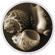 Seashells Spectacular No 1 Round Beach Towel