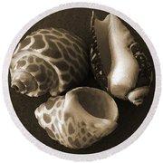 Seashells Spectacular No 1 Round Beach Towel