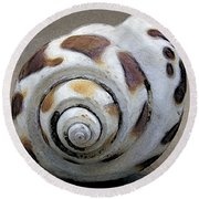Seashells Spectacular No 2 Round Beach Towel