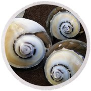 Seashells Spectacular No 23 Round Beach Towel