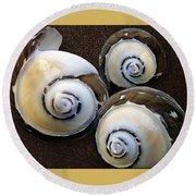 Seashells Spectacular No 23 Round Beach Towel