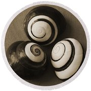 Seashells Spectacular No 28 Round Beach Towel