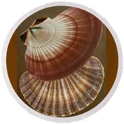 Round Beach Towel featuring the photograph Seashells Spectacular No 53 by Ben and Raisa Gertsberg