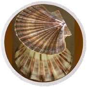 Round Beach Towel featuring the photograph Seashells Spectacular No 54 by Ben and Raisa Gertsberg