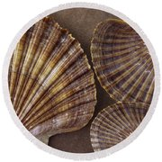 Seashells Spectacular No 7 Round Beach Towel