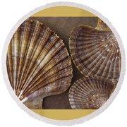 Seashells Spectacular No 7 Round Beach Towel