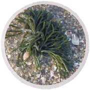 Round Beach Towel featuring the photograph Seaweed by Robert Nickologianis