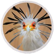 Secretary Bird Portrait Close-up Head Shot Round Beach Towel