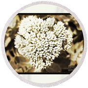 Sedum In The Heart Round Beach Towel