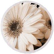 Sepia Gerber Daisy Flowers Round Beach Towel by Jennie Marie Schell