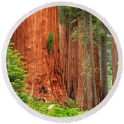 Sequoias Round Beach Towel