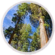 Sequoias Reaching To The Clouds In Mariposa Grove In Yosemite National Park-california Round Beach Towel
