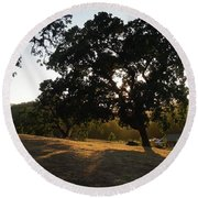 Shade Tree  Round Beach Towel by Shawn Marlow