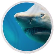Shark Round Beach Towel