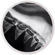 Shark's Teeth Round Beach Towel by Lynn Palmer