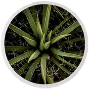 Round Beach Towel featuring the photograph Sharp Points - Yucca Plant by Steven Milner