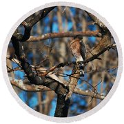 Round Beach Towel featuring the photograph Sharp Shinned Hawk by Mim White