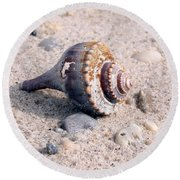 Round Beach Towel featuring the photograph Shell by Karen Silvestri