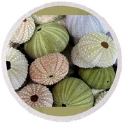 Shells 5 Round Beach Towel
