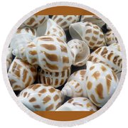 Shells - 7 Round Beach Towel