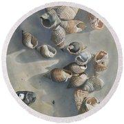 Shells On A Sandy Beach Round Beach Towel