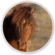 Shetland Pony At Sunset Round Beach Towel
