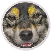 Round Beach Towel featuring the photograph Shiba Inu by Dennis Baswell