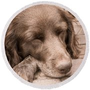 Shishka Dog Dreaming The Day Away Round Beach Towel
