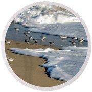 Shore Birds South Florida Round Beach Towel