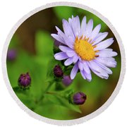 Showy Aster Round Beach Towel