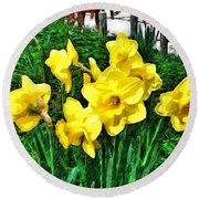 Shy Daffodils  Round Beach Towel