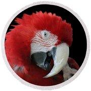 Shy Macaw Round Beach Towel by Judy Whitton