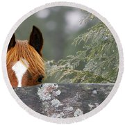 Shyness Round Beach Towel by Michelle Twohig