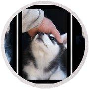 Siberian Husky Puppies Mans Best Friend Round Beach Towel by Kathy Clark