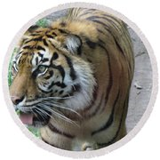 Round Beach Towel featuring the photograph Siberian Tiger by Lingfai Leung