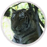 Siberian Tiger Profile Round Beach Towel by John Telfer