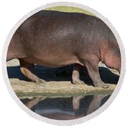 Side Profile Of A Hippopotamus Walking Round Beach Towel by Panoramic Images