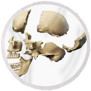 Side View Of Human Skull With Parts Round Beach Towel