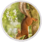 Side View Of Red Squirrel Climbing Round Beach Towel