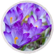 Signs Of Spring Round Beach Towel