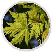 Silver Maple Round Beach Towel