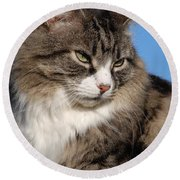 Silver Tabby Cat Round Beach Towel