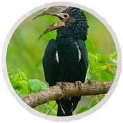 Silvery-cheeked Hornbill Perching Round Beach Towel by Panoramic Images