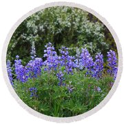 Round Beach Towel featuring the photograph Silvery Lupine Black Canyon Colorado by Janice Rae Pariza