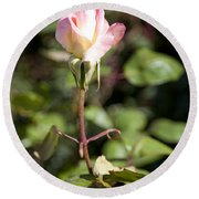 Round Beach Towel featuring the photograph Single Rose by David Millenheft