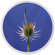 Single Teasel Round Beach Towel