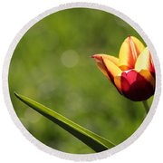 Single Tulip Round Beach Towel by Kenny Glotfelty
