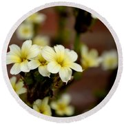 Sisyrinchium Striatum Round Beach Towel